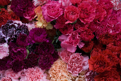 flowers-pink-pretty-purple-red-Favim.com-186204