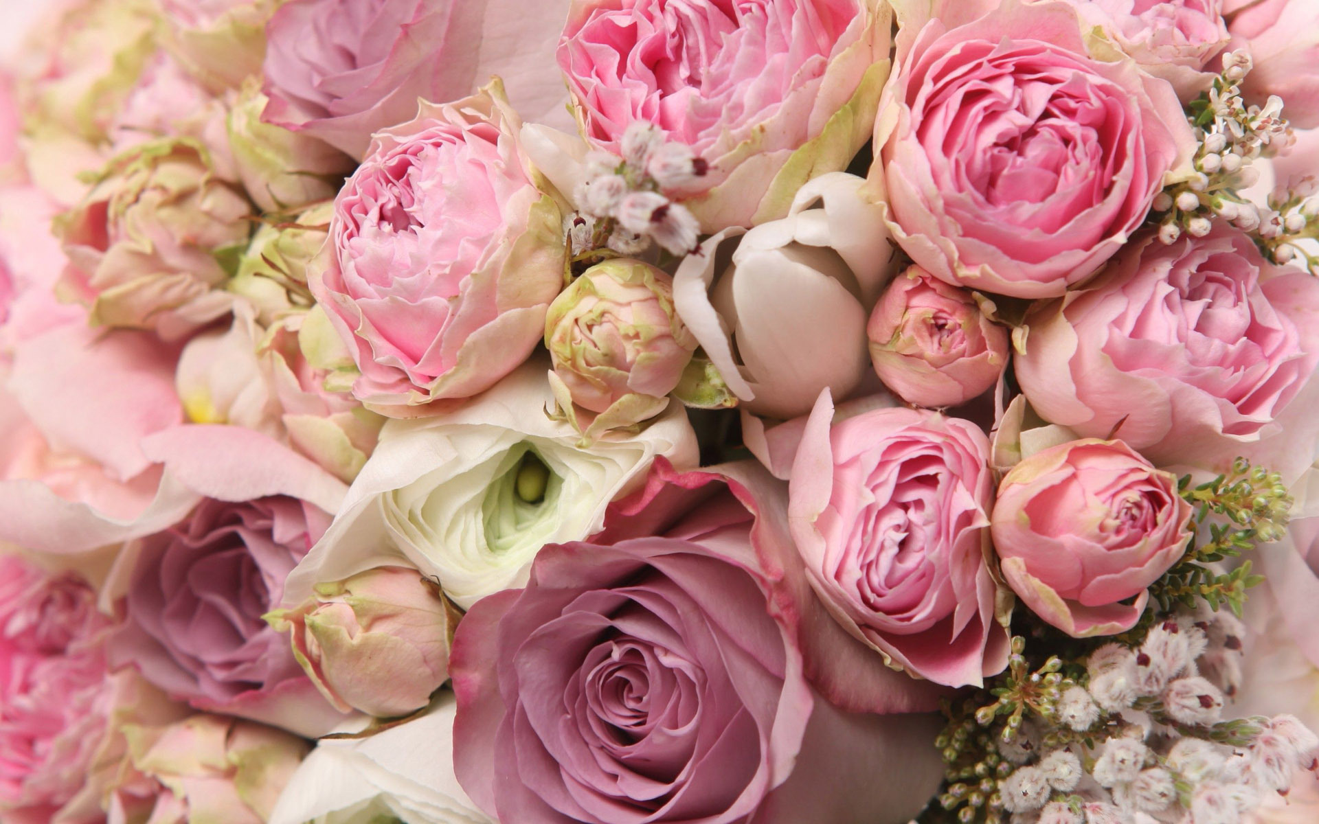 peonies-wallpaper-2